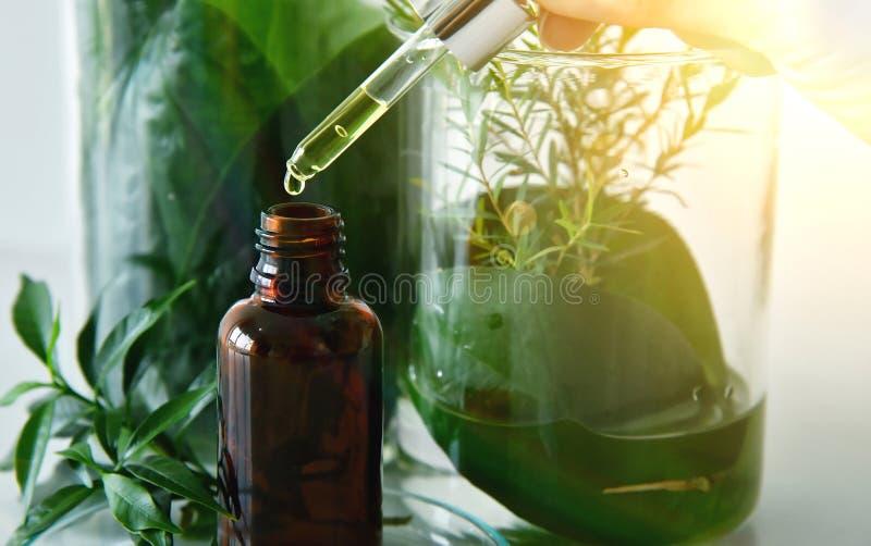 Scientifique avec la recherche naturelle de drogue, la botanique organique naturelle et la verrerie scientifique, médecine verte  images stock