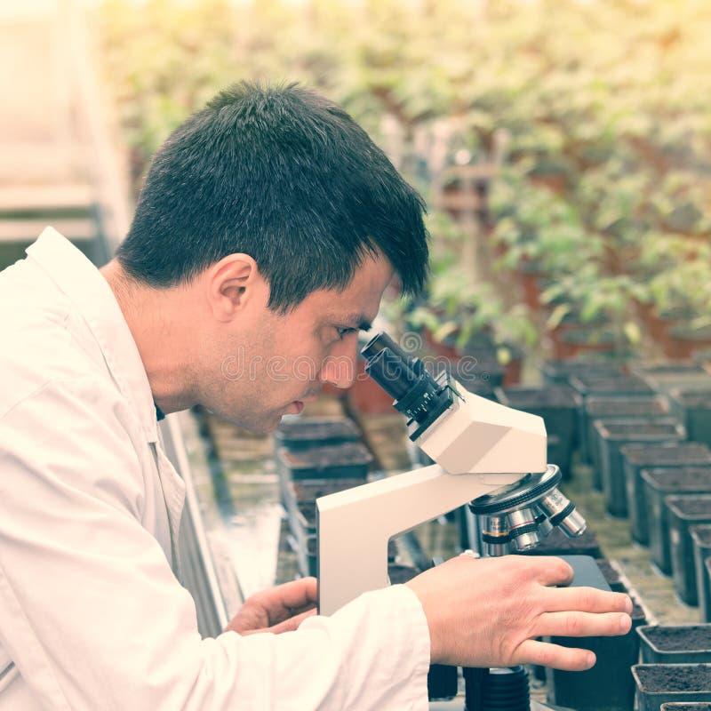 Scientifique avec le microscope dans la maison verte photos stock