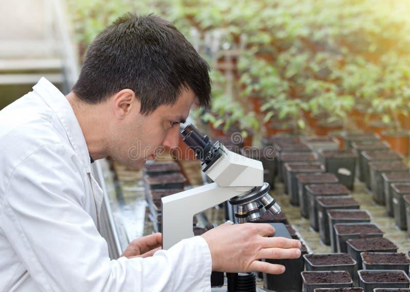 Scientifique avec le microscope dans la maison verte photographie stock libre de droits