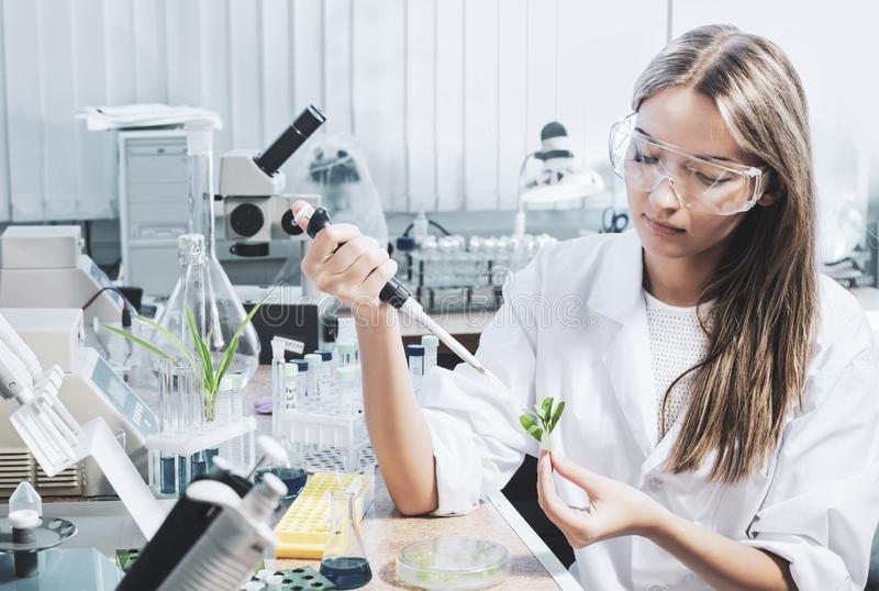 Scientifique dans le laboratoire chimique photos libres de droits