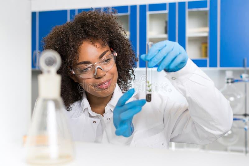 Scientifique féminin Examining Plant Sample de laboratoire dans le tube à essai, travail dans le laboratoire de la génétique photographie stock libre de droits