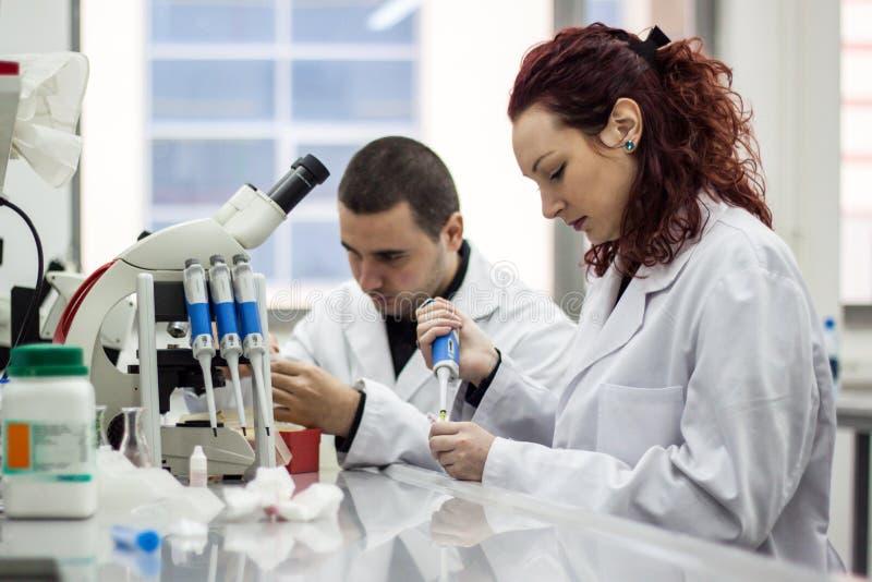 Scientifique moderne travaillant avec la pipette dans le laborator de biotechnologie photos libres de droits
