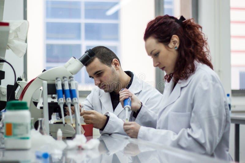 Scientifique moderne travaillant avec la pipette dans le laborator de biotechnologie photo libre de droits