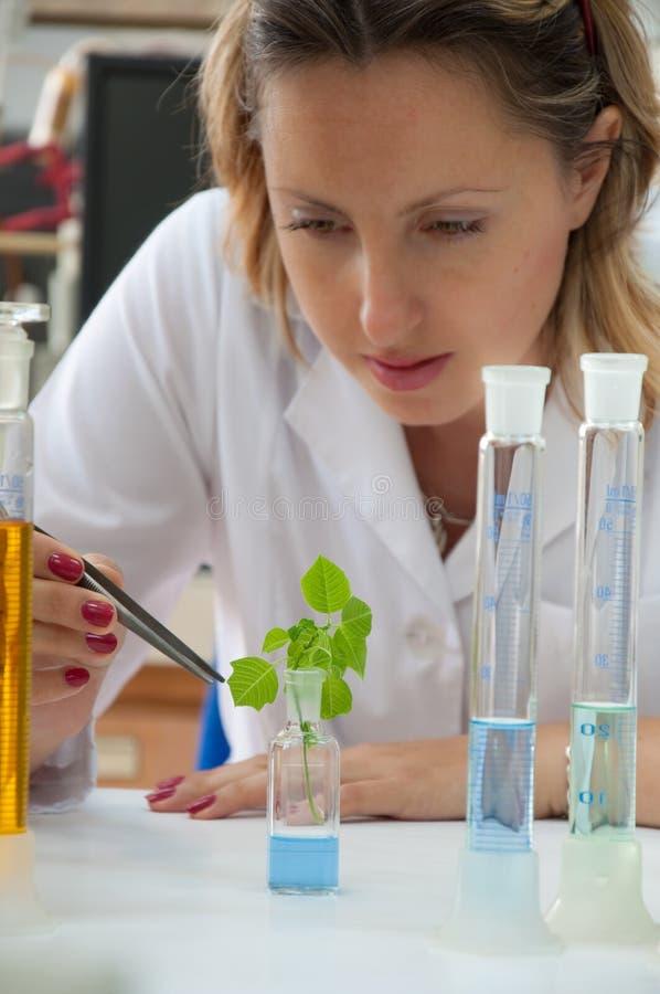 Scientifique recherchant une plante verte images stock