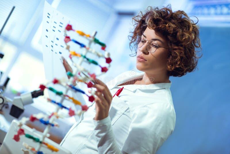 Scientifique regardant l'ADN image stock