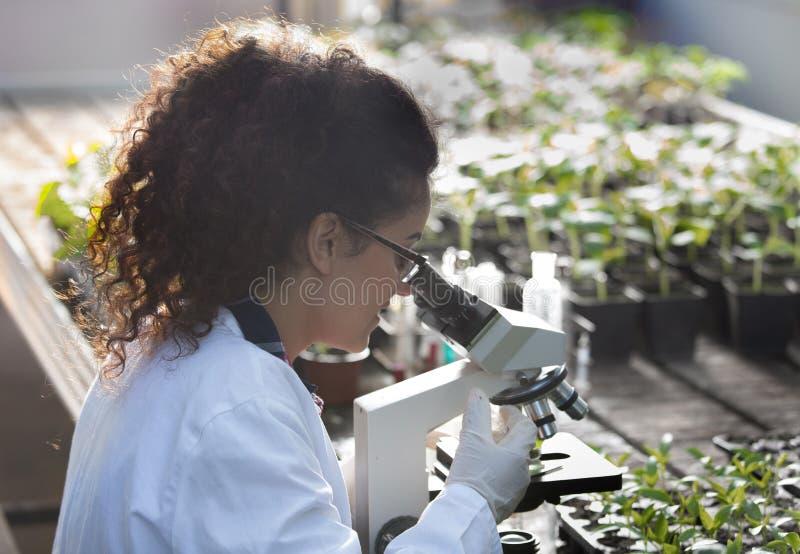 Scientifique regardant le microscope en serre chaude images stock