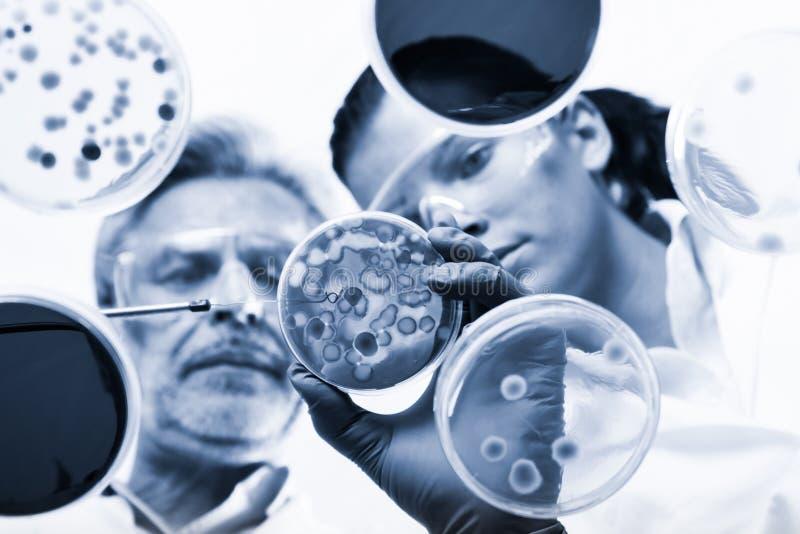 Scientifiques de vie recherchant dans le laboratoire de soins de sant? images stock