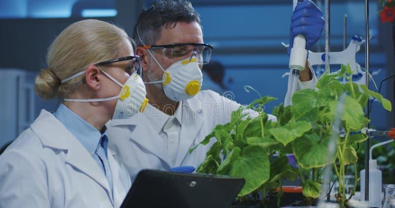 Scientifiques examinant une plante verte images libres de droits