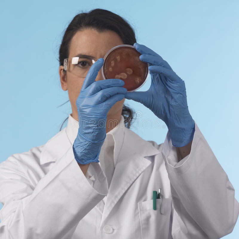 Download Scientis with petri plate stock photo. Image of chemical - 16395682
