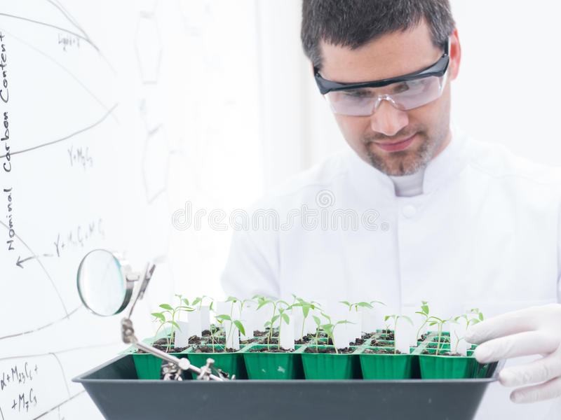 Download Scientist Analyzing Seedlings Stock Image - Image: 31258689