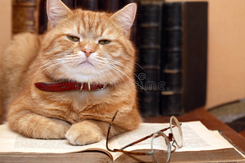 Scientist Cat stock images
