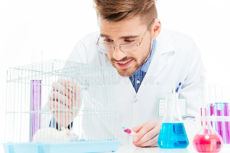 Scientist doing experiments with rat royalty free stock photo