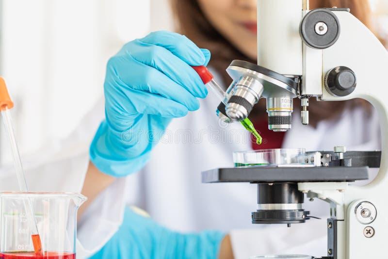 Scientist dropping liquid to petri dish royalty free stock photo