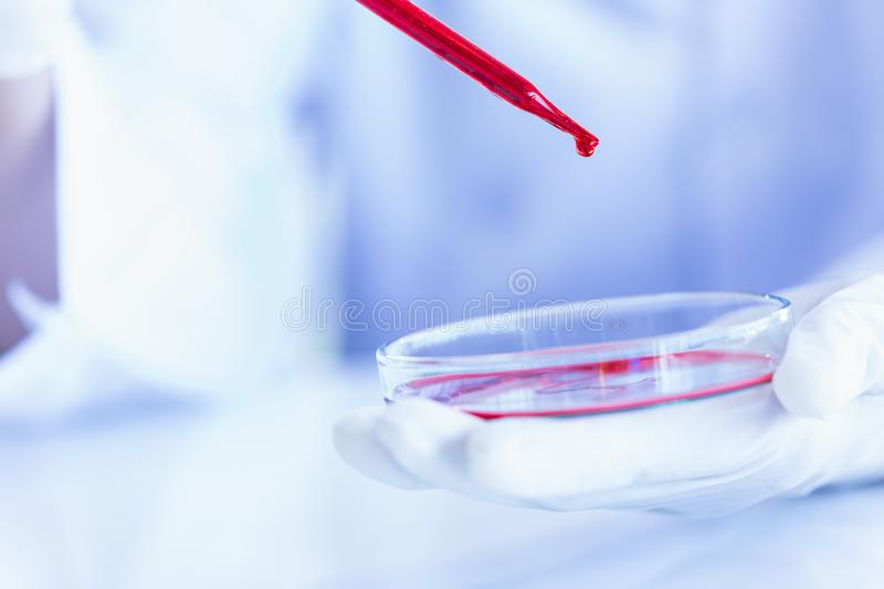 Scientist dropping liquid to petri dish stock photography