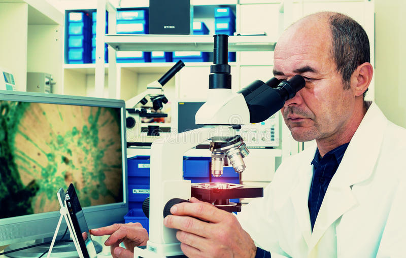Scientist examines biopsy. Samples science royalty free stock photos