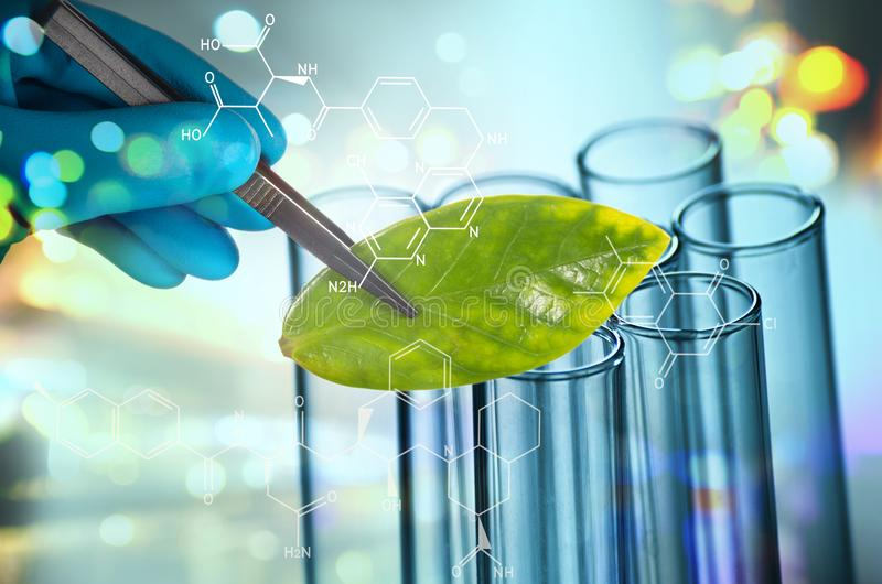 Scientist hand in blue glove holding green leaf , biotechnology stock image