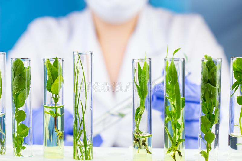 Scientist hold test tube with plant inside in laboratory. Close up royalty free stock images
