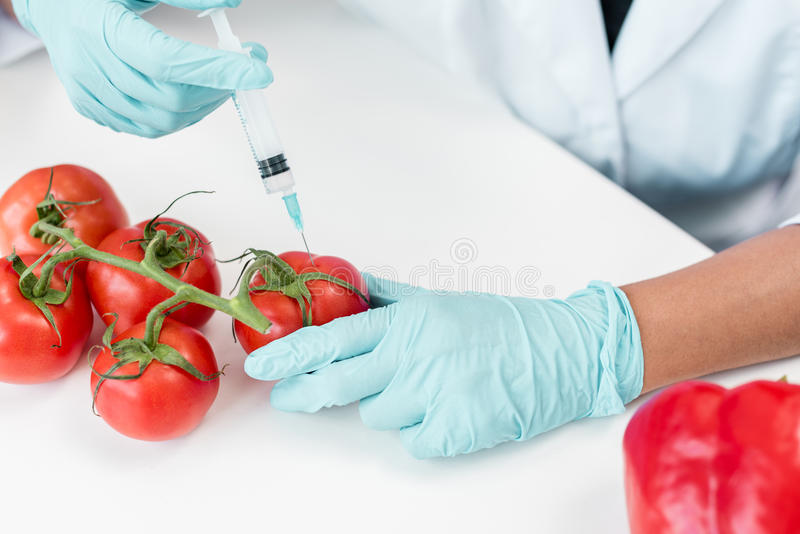 Scientist holding syringe and making experiment with vegetables in lab. Cropped shot of scientist holding syringe and making experiment with vegetables in lab stock photo