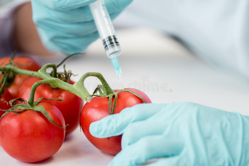 Scientist holding syringe and making experiment with vegetables in lab. Cropped shot of scientist holding syringe and making experiment with vegetables in lab stock photography