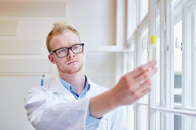 Scientist makes urine test. To analyze alcohol consumption royalty free stock photo