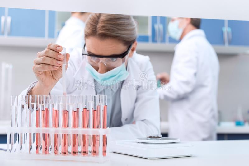 Scientist making experiment. Professional scientist in sterile mask and protective glasses, making experiment with test tubes in chemical lab royalty free stock photography