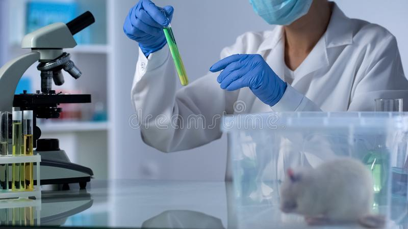 Scientist mixing test liquid in tube looking at reaction, lab rat sitting in box royalty free stock photo