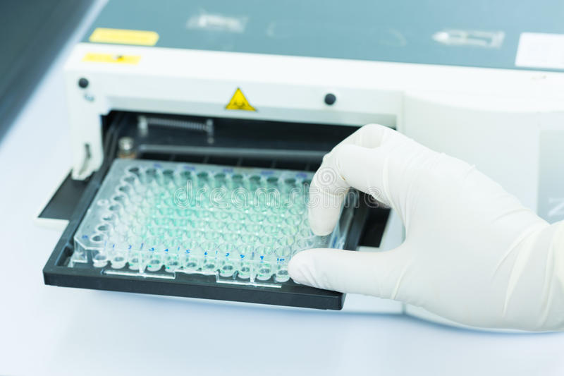 Scientist is putting ELISA plate to measure OD with micro plate reader royalty free stock photos