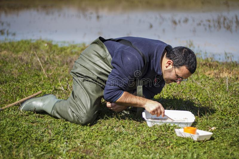 Scientist sorting biological net samples at a wetland. Scientist sorting biological net samples on site at a wetland stock image