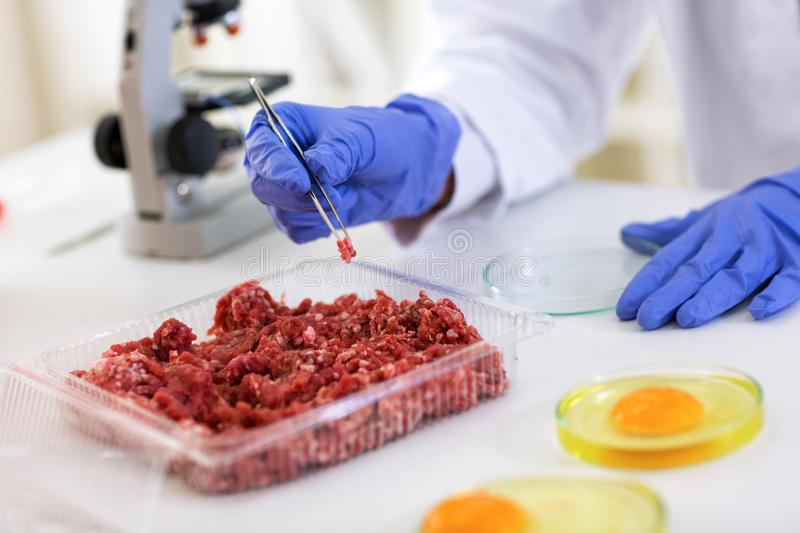 Scientist taking sample of meat to making test quality, food qua. Lity control expert inspecting at meat royalty free stock photo