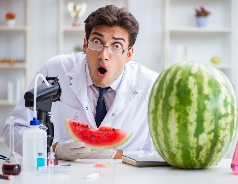 Scientist testing watermelon in lab. The scientist testing watermelon in lab stock image
