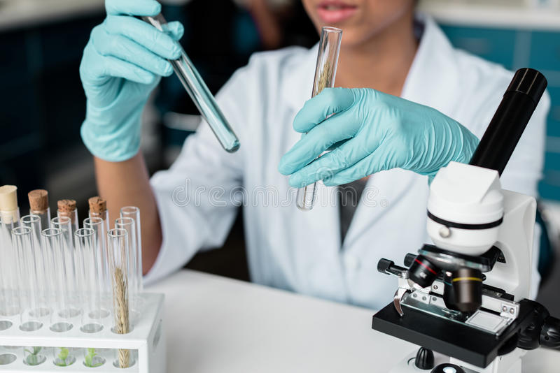 Scientist in white coat examining test tubes while making experiment in chemical lab. Professional scientist in white coat examining test tubes while making royalty free stock images