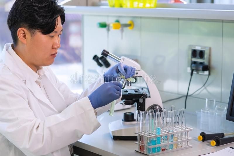 Scientist working in lab. Asian doctor making medical research. Laboratory tools: microscope, test tubes, equipment. Biotechnology, chemistry, science stock images