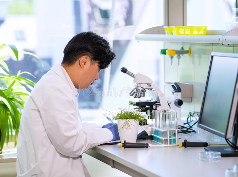 Scientist working in lab. Asian doctor making medical research. Laboratory tools: microscope, test tubes, equipment. Biotechnology, chemistry, science stock photos