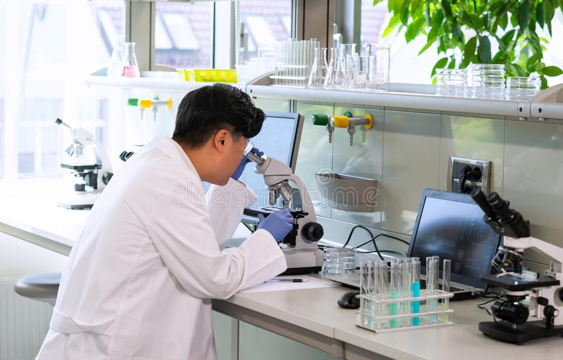 Scientist working in lab. Asian doctor making medical research. Laboratory tools: microscope, test tubes, equipment. Biotechnology, chemistry, science royalty free stock images