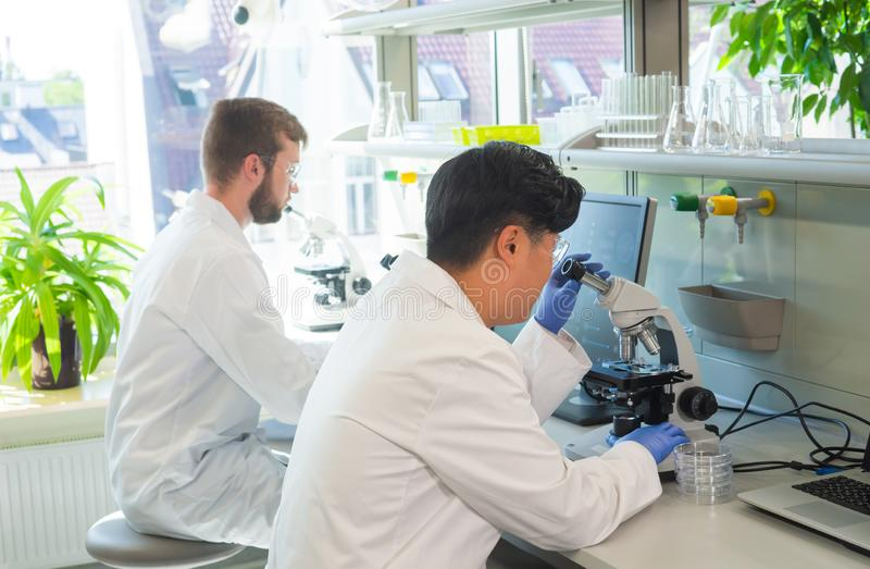 Scientist working in lab. Doctors making medical research. Biotechnology, chemistry, science, experiments and healthcare. Scientist working in lab. Doctors royalty free stock photography