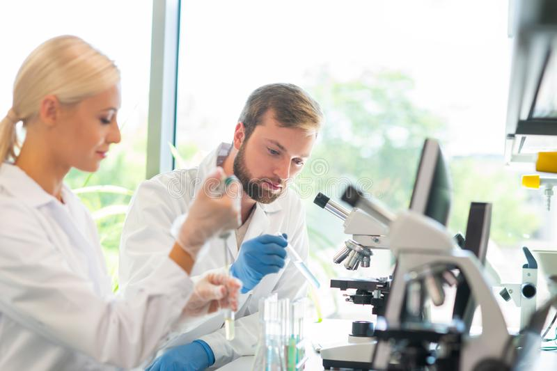 Scientist working in lab. Doctors making medical research. Biotechnology, chemistry, science, experiments and healthcare. Scientist working in lab. Doctors royalty free stock photos