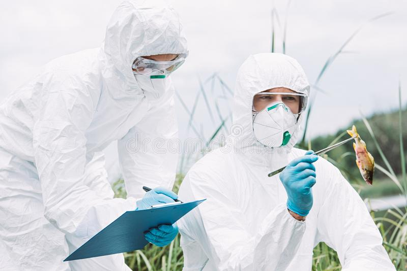 scientists in protective masks and suits examining fish and writing in clipboard stock images