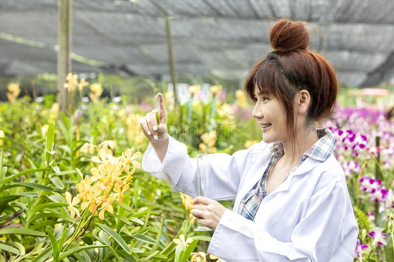 Scientists smile holding a computer in an orchid garden. Botanical research researchers, orchids, wearing a scientist`s shirt and. Her hands holding a science stock photos