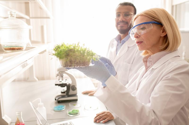 Scientists studying growth of seedling. Content multi-ethnic scientists in lab coats standing in laboratory room and studying growth of seedling royalty free stock image