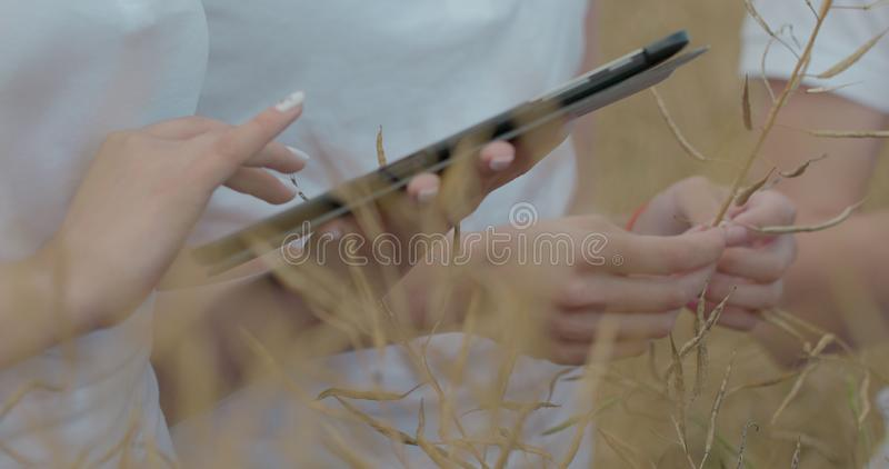 Scientists working in field with agriculture technology. Close up of woman hand touching tablet pc in wheat stalks royalty free stock photography