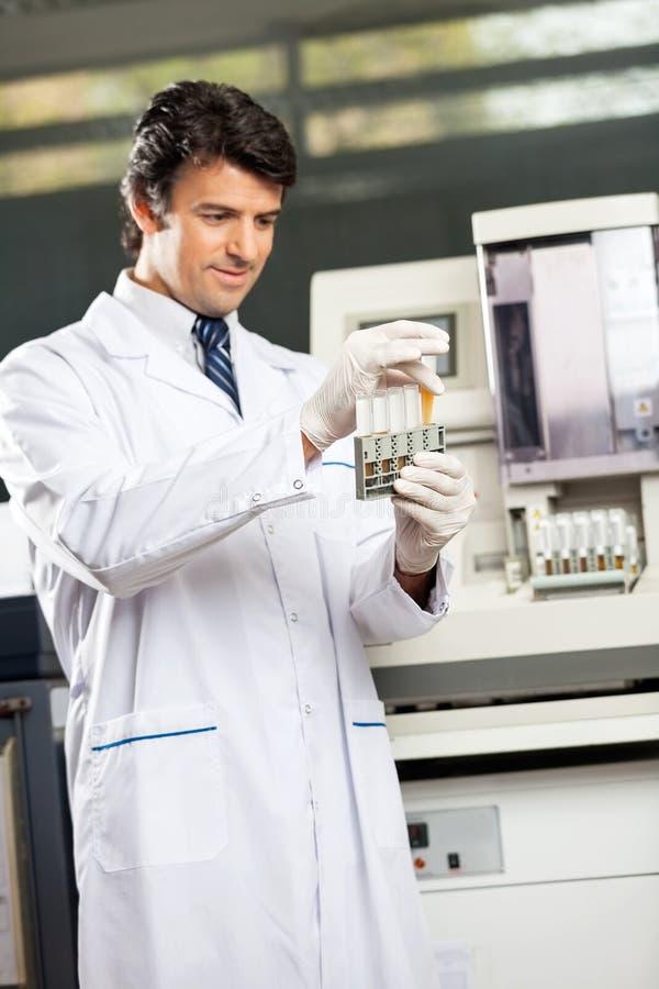 Scienziato Analyzing Urine Samples in laboratorio fotografie stock