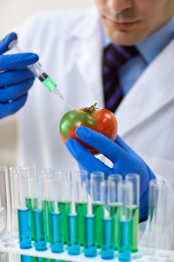Scienziato che inietta GMO in un pomodoro fotografia stock libera da diritti