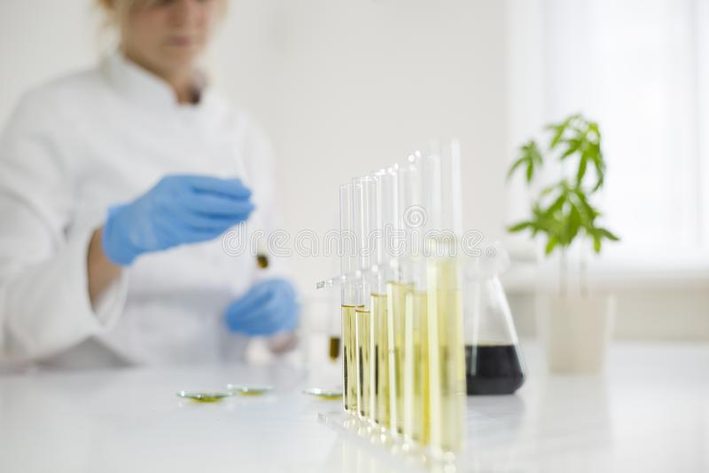 Scienziato che lavora con l'olio farmaceutico del cbd in un laboratorio con un'attrezzatura di vetro immagine stock