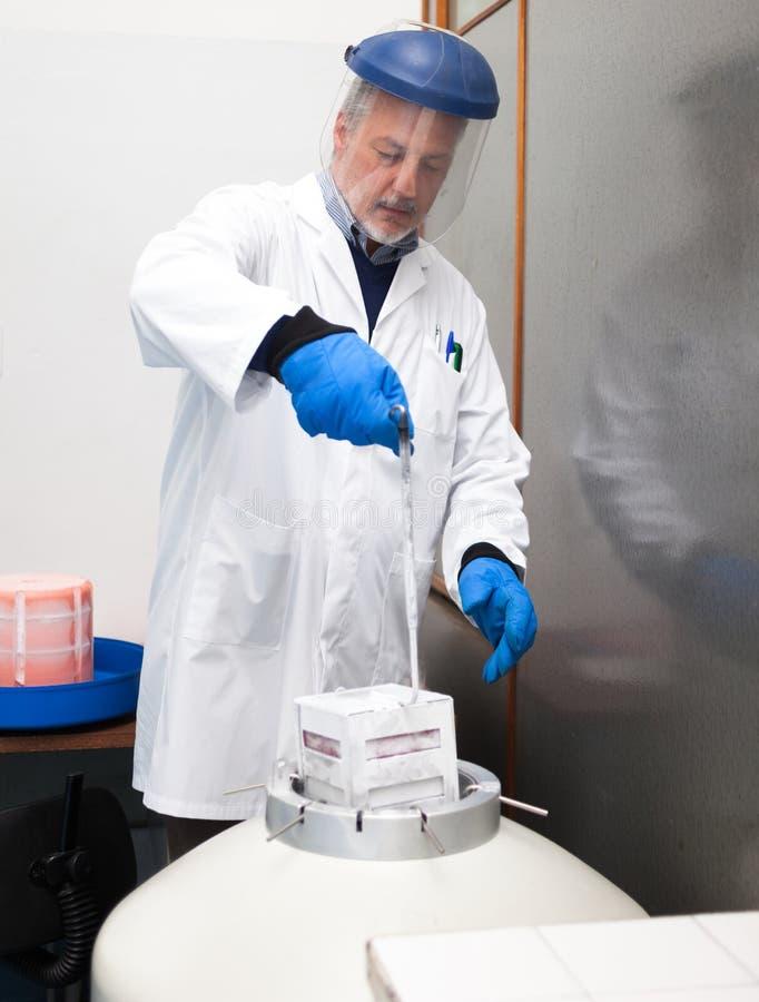 Scienziato che preleva i campioni da un contenitore criogenico dell'azoto fotografia stock