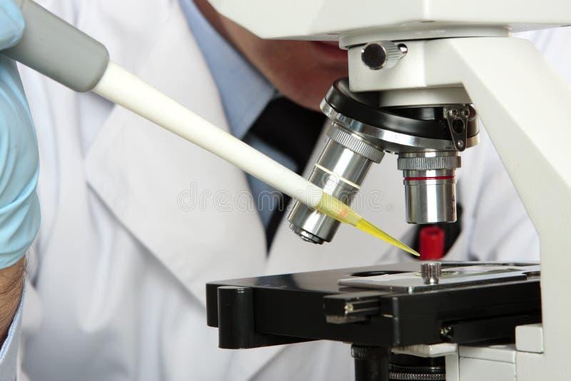 Scienziato del laboratorio che esamina il microscopio fotografia stock