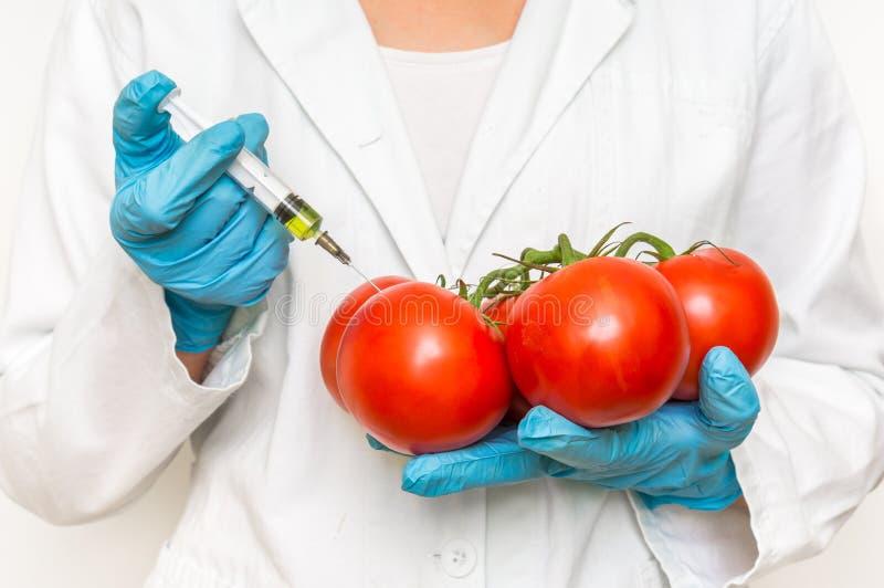 Scienziato OMG che inietta liquido dalla siringa nei pomodori rossi fotografia stock libera da diritti