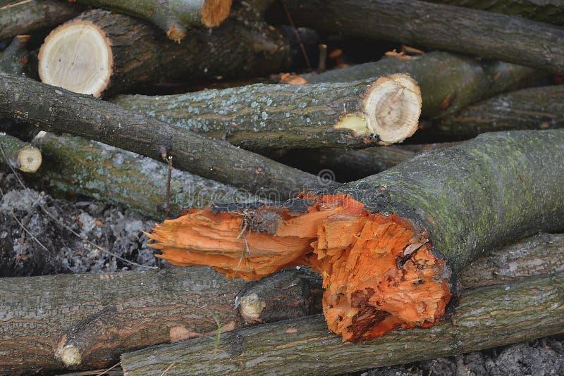 SCIERIE Fond en bois firewood image stock