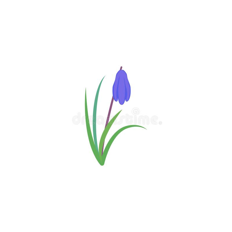 Scilla della pianta Siberica siberiano di Scilla della scilla marina fiore della molla con le foglie ed il gambo royalty illustrazione gratis