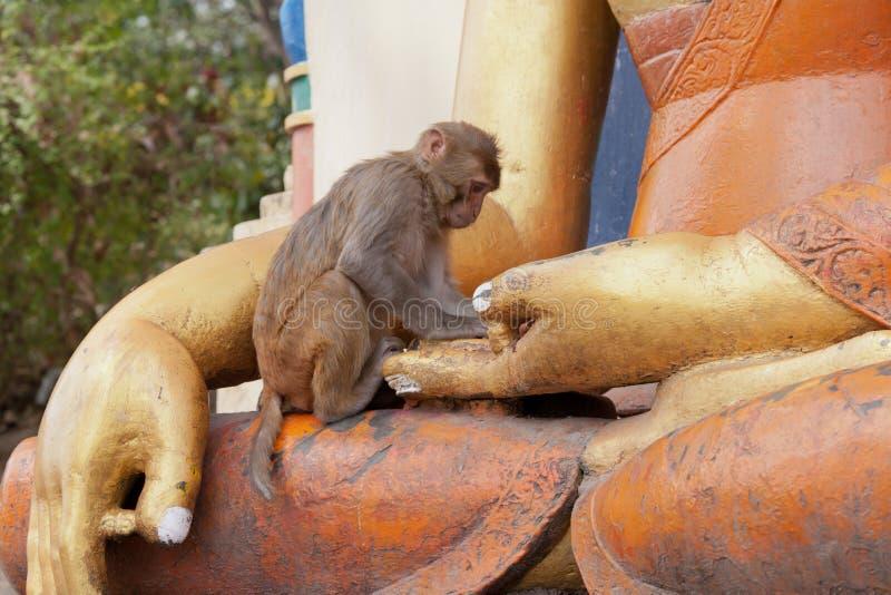 Scimmia al tempiale di Swayambhunath, Nepal, Kathmandu fotografia stock libera da diritti