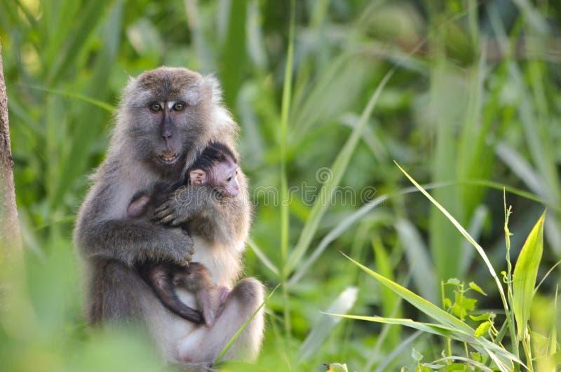 Scimmia del bambino e della madre fotografie stock libere da diritti